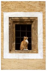 framed cat by ssilence