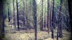Woods by P3droD