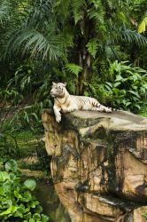 Mohan White Tiger by gaky77
