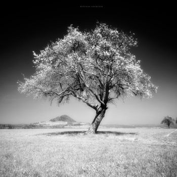 The Infrared Tree II by DREAMCA7CHER
