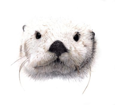 Otter by pixelworlds