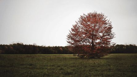 GIF - Lone tree in the wind by turst67