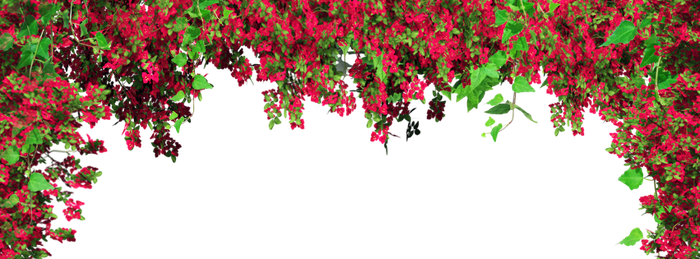 Background Png by DLovatic1