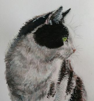 My cat ( painting) by Vanimelda4