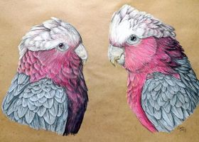 Commission - Two Galahs by KristynJanelle