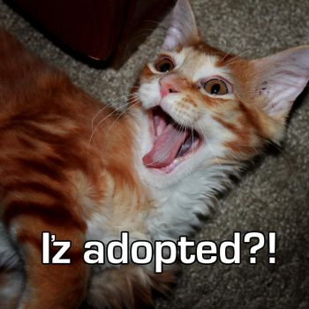 Iz Adopted by docskalski