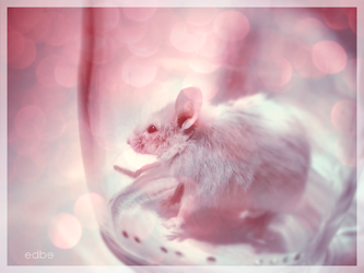 My little mouse by miss-edbe