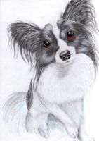 Papillon dog by x----eLLiE----x