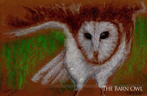 Barn Owl - ALREADY by affannitihardjo