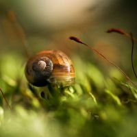 Little Snail . V by Somebody--else