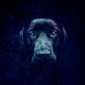 -- space dog by Cue-the-Cannibal