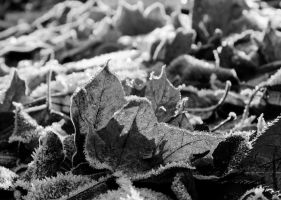 Crystal leaves BW by stevezpj