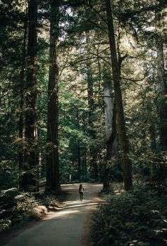 Redwood National Park II by x-horizon