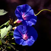 Blue for you ... by xjames7