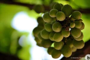 not ripe yet by AlexDeeJay