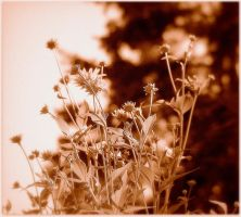 Bouquet Of Flowers - Sepia by surrealistic-gloom