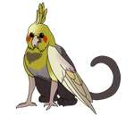 Cockatiel Griffin [OTA] [OPEN] by AngelsAdopts
