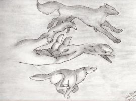 Wolves in my Hand by no-cheza
