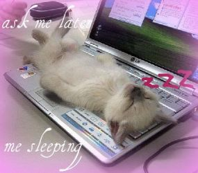 sleeping on laptop by tinkerbell1388