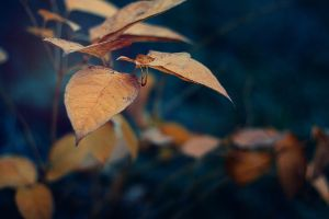 Cold Autumn by k-simir