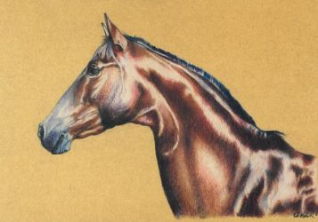 Drawing - Shiny horse by Ennete