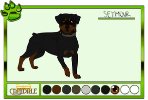 Seymour | DoC | Reference by EquestrianJade