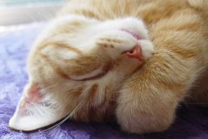 sleepy time paw by lucytherescuedcat