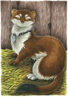 Phelix the Weasel by Merinid-DE