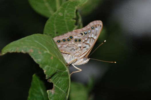 Moth on a Leaf by LIfes-Commotion