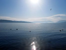 Lake Zurich: Sunny 2 by Tabascofanatikerin