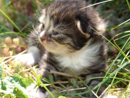 In Ze Grass by ToygerCat