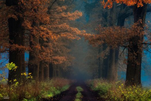 -Shaman_s road on the other side- by Janek-Sedlar