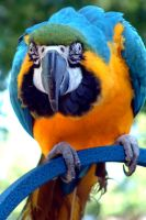 Parrot by BonkuProductions