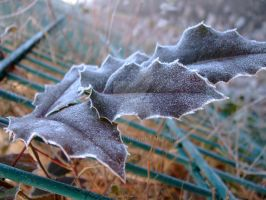 Frosty Leaves 2 by Dwynariel