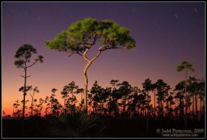 Last Light on the Pinelands by juddpatterson