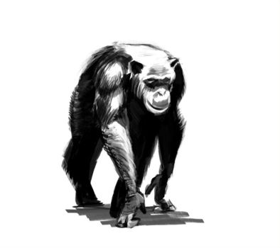 Chimp by Hungry-Porkins