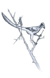 The Butcherbird by Ashere