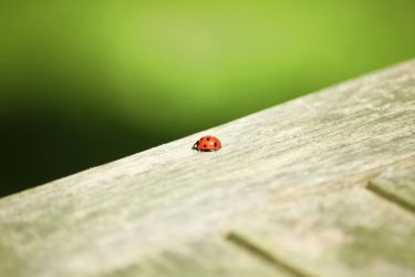 Ladybird. by kle0012