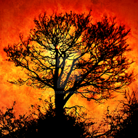 Tree of FIre by PerseCore