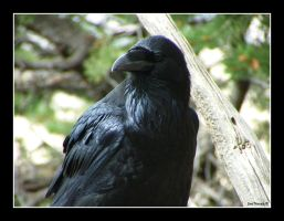 Nevermore by CaptBogart