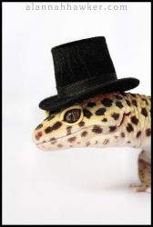 Top Hat by Alannah-Hawker