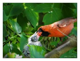 Caring father... by gintautegitte69