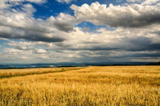 just before harvest by marrciano