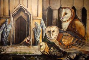 Barn Owls by dthehippie
