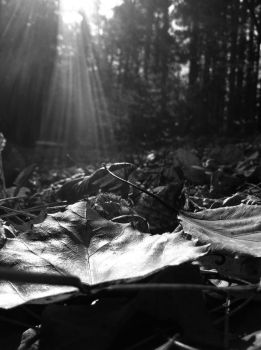 Fallin Forest Floor by COTMcLeod