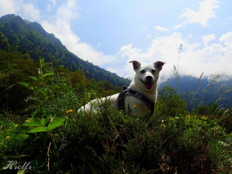 Happy friend in mountains by Horlf