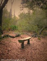 Inviting Forest Bench by brunettephotographer