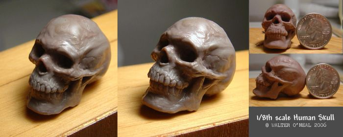 Human Skull - 1:8th scale by No-Sign-of-Sanity