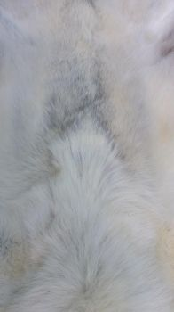 white wolf fur stock by AdarkerNEMISIS