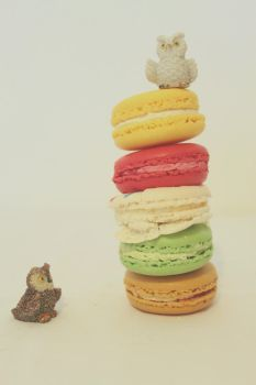 Macaron Owl Friends by apparate